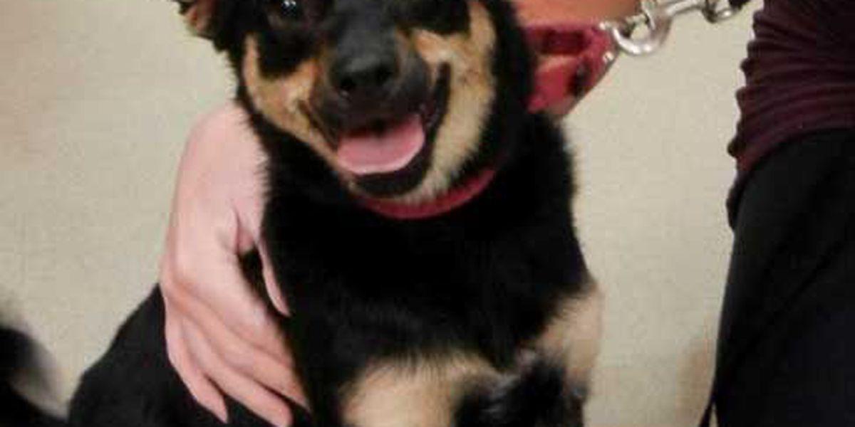 Adopted! Pet of the Week Naomi