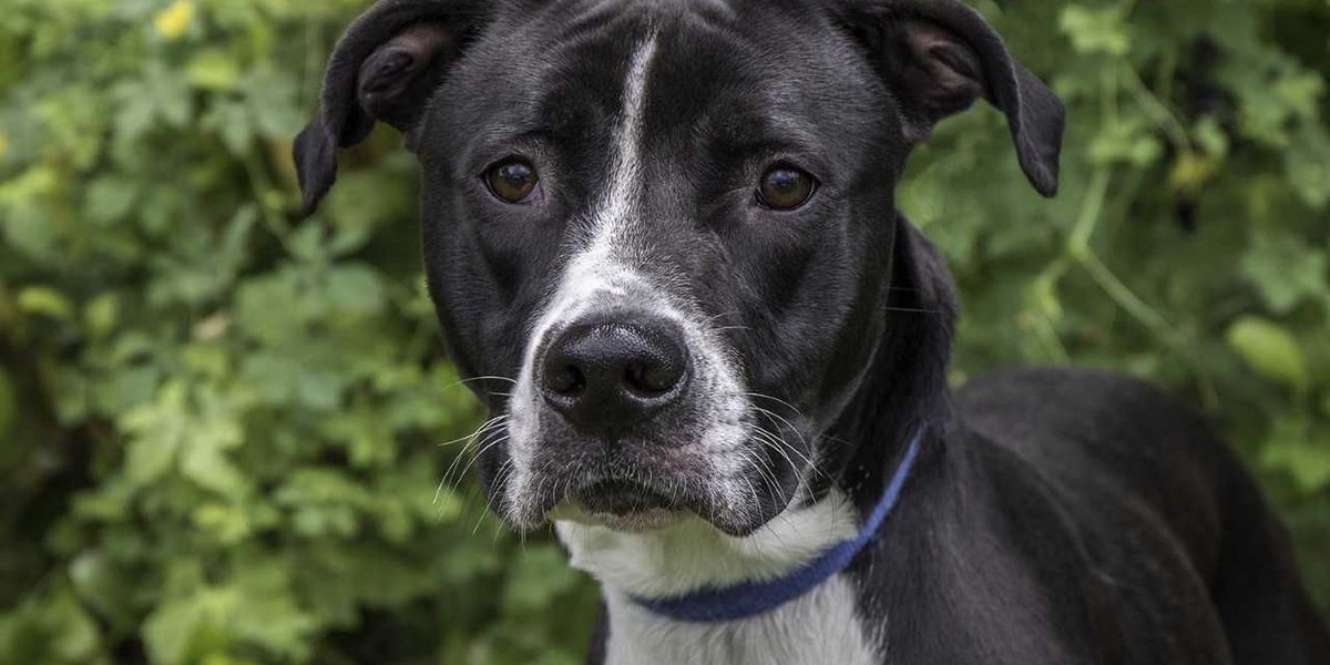 Pet of the Week Oliver