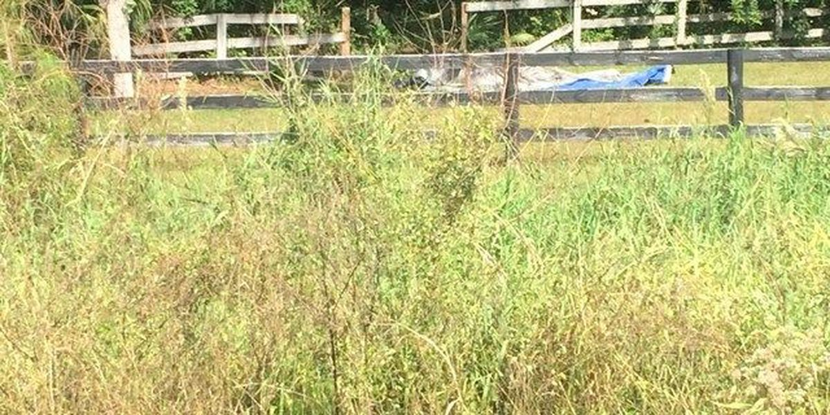 1,300-pound show horse slaughtered on Florida farm