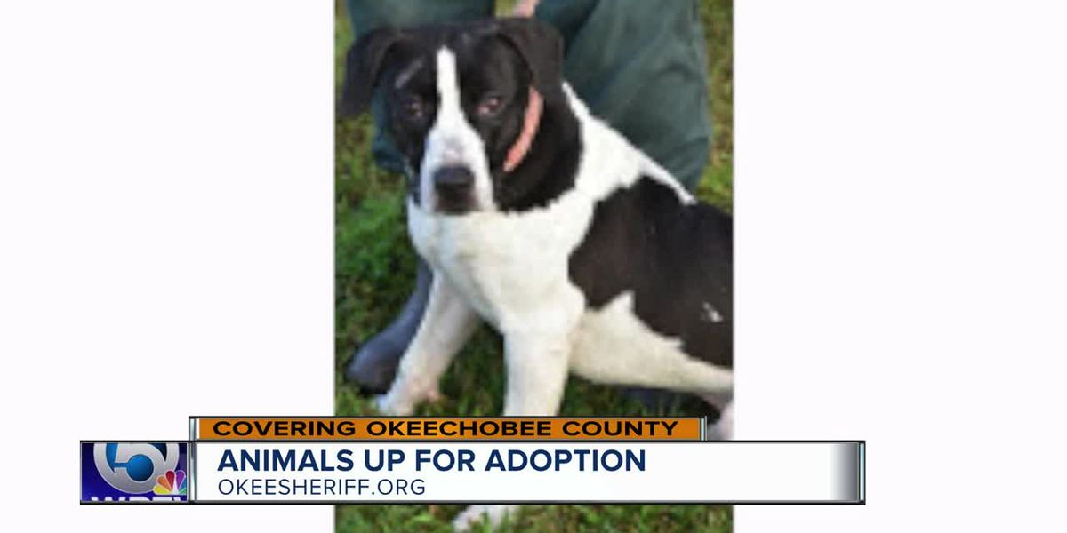 Animals up for adoption in Okeechobee County