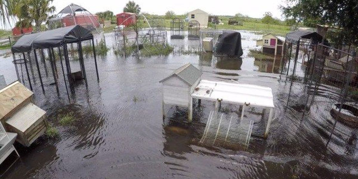 Water in Loxahatchee affecting animal rescues