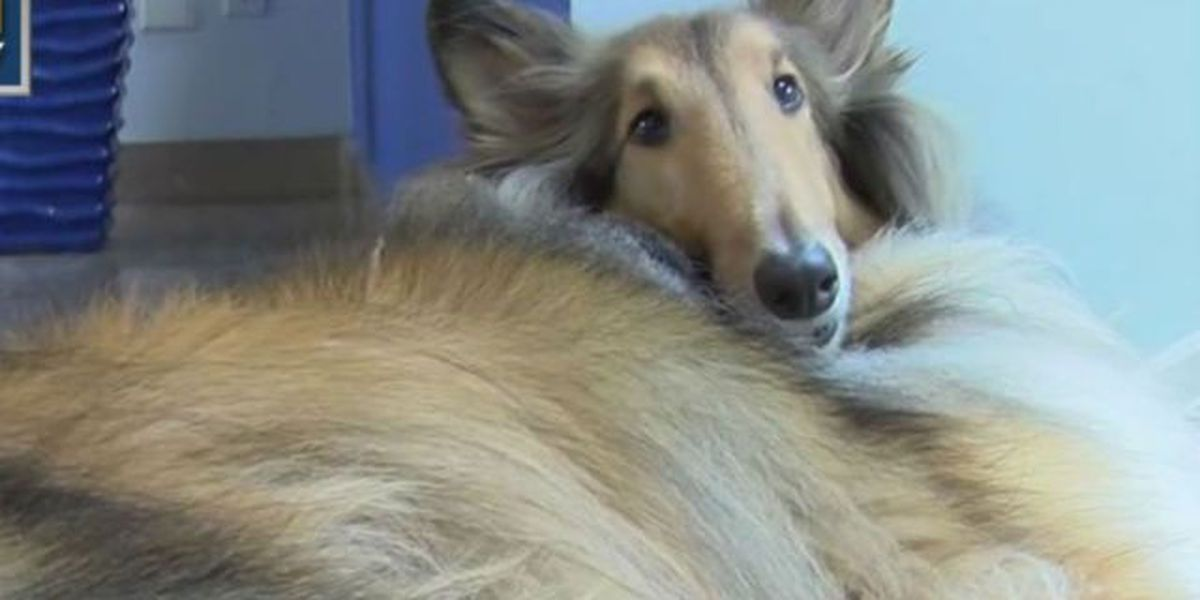 USDA animal treatment records removed