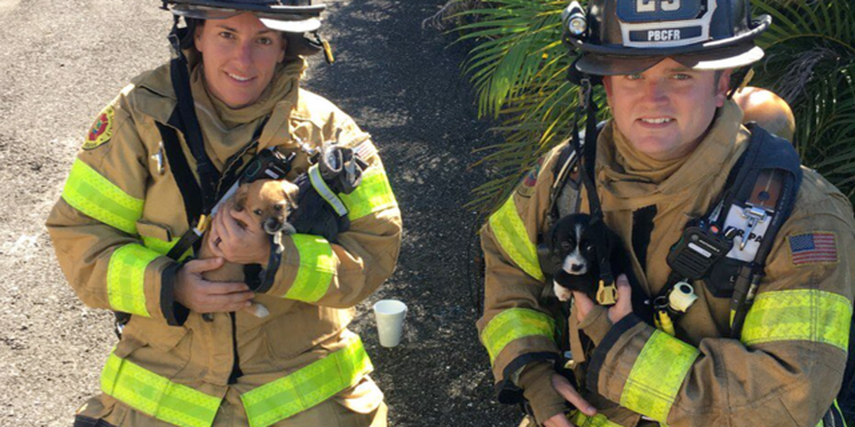 Dogs rescued in house fire