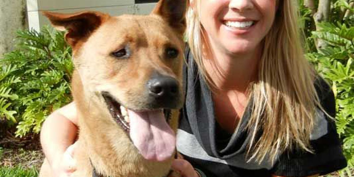 Adopted! Pet of the Week Tommi