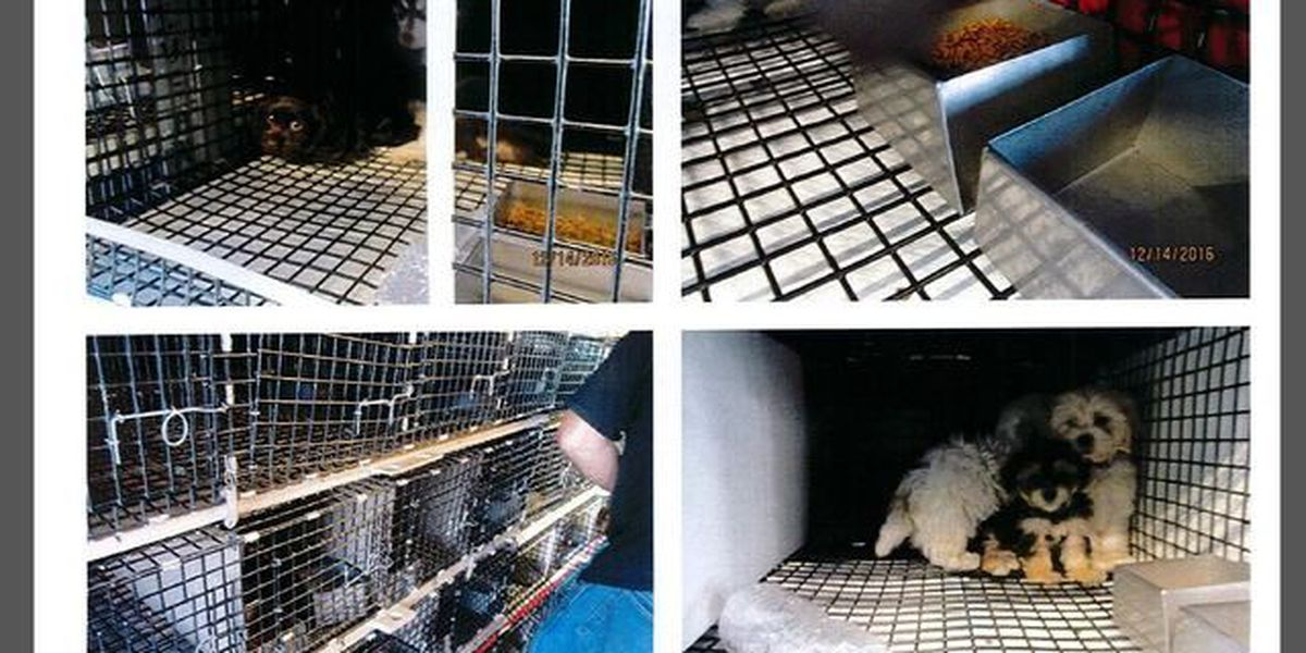 Royal Palm Beach pet store investigated