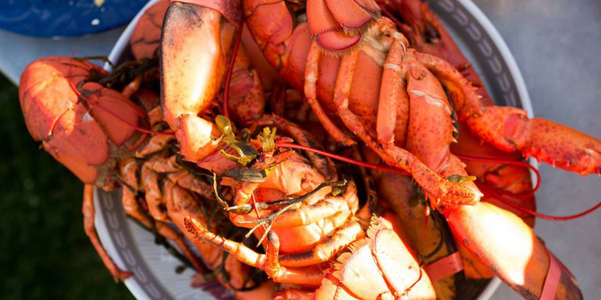 Seafood festival serves up tasty dishes in Boca Raton