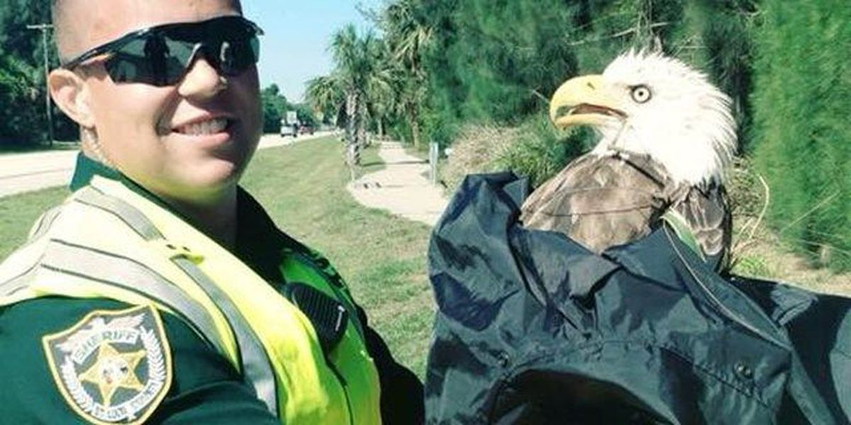 St. Lucie County deputy rescues bald eagle