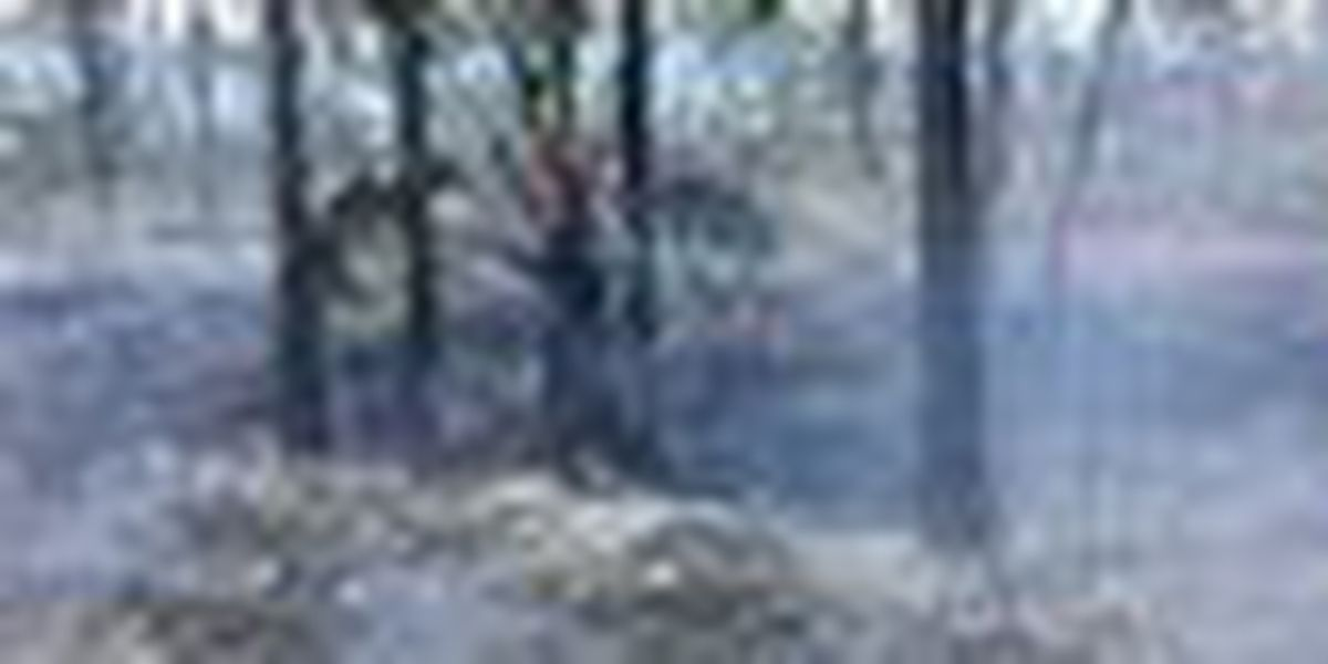 Brush fire redirected from Martin Co. homes