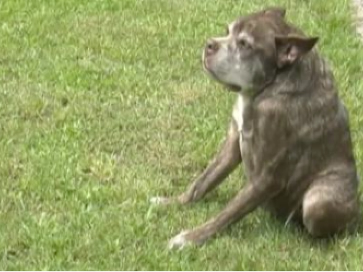 Loxahatchee dog owners share memories of dog who once won World's Ugliest Dog contest