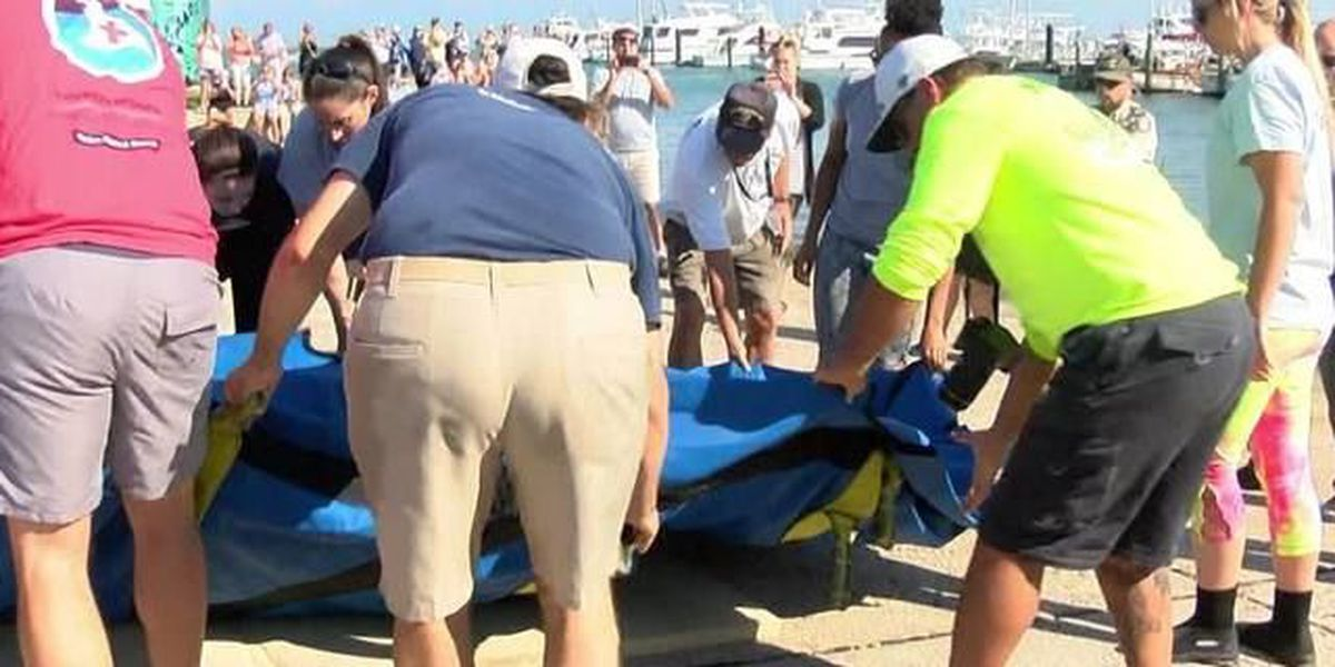 'Leia' the manatee released in Fort Pierce