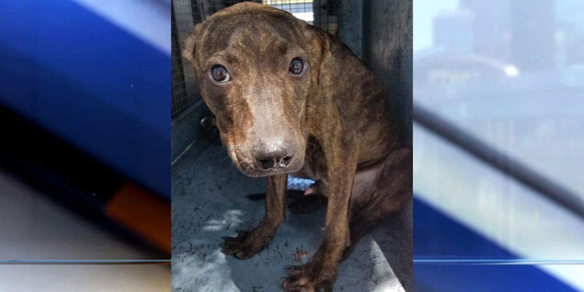 Dog rescued from crate in sweltering heat in Boynton Beach making progress