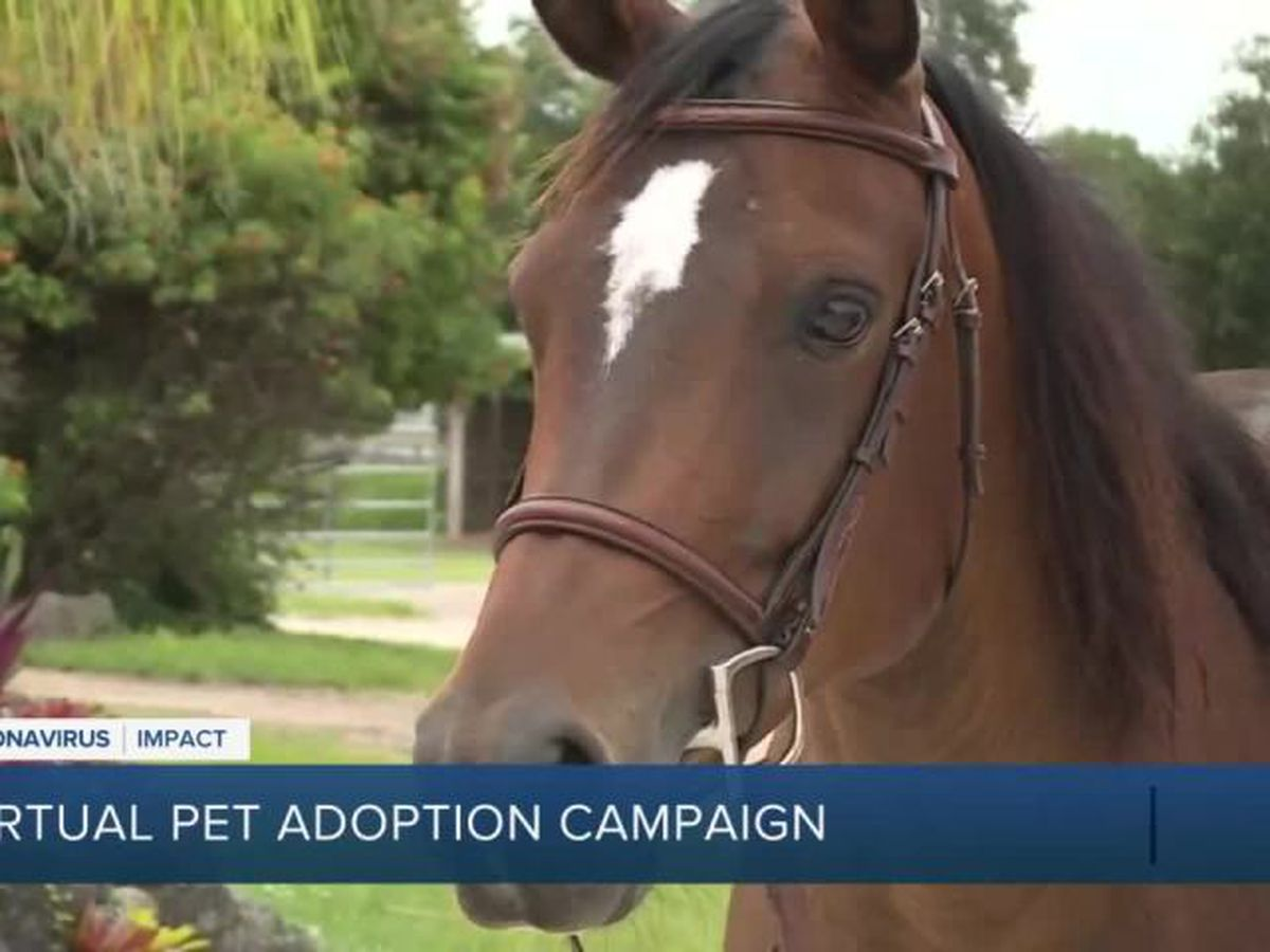 Rescue groups holding virtual pet adoption this weekend