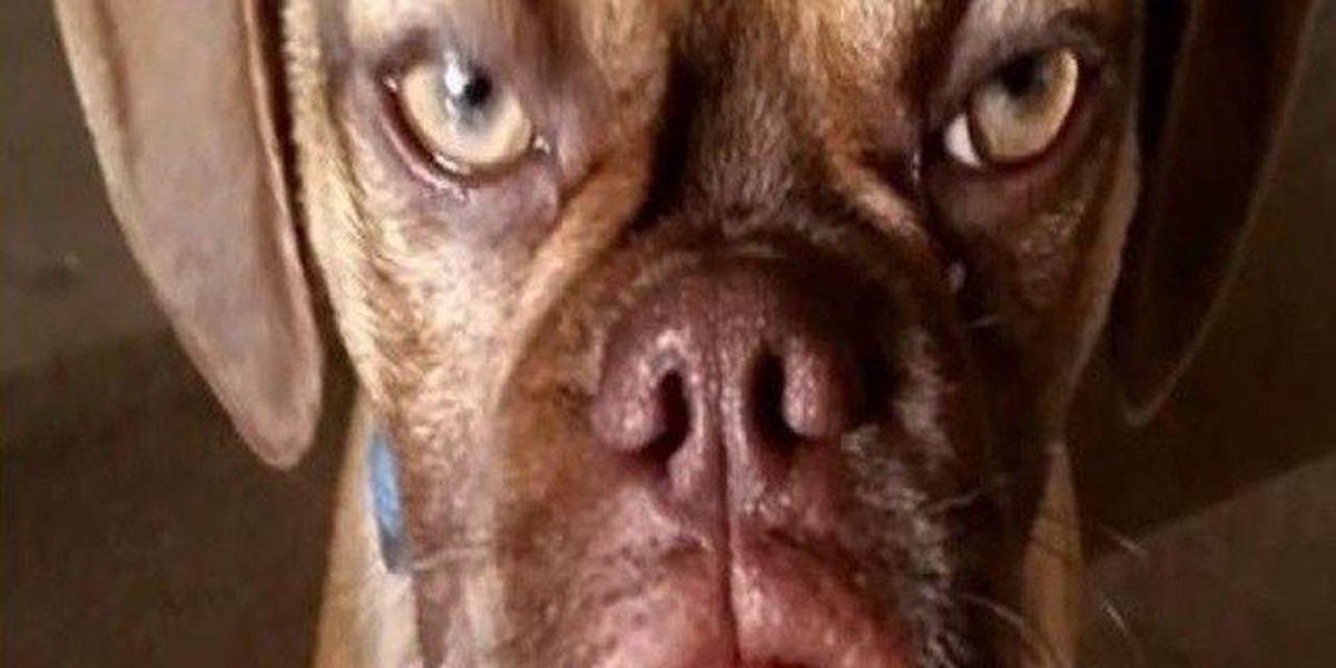 'Earl the Grumpy Puppy'