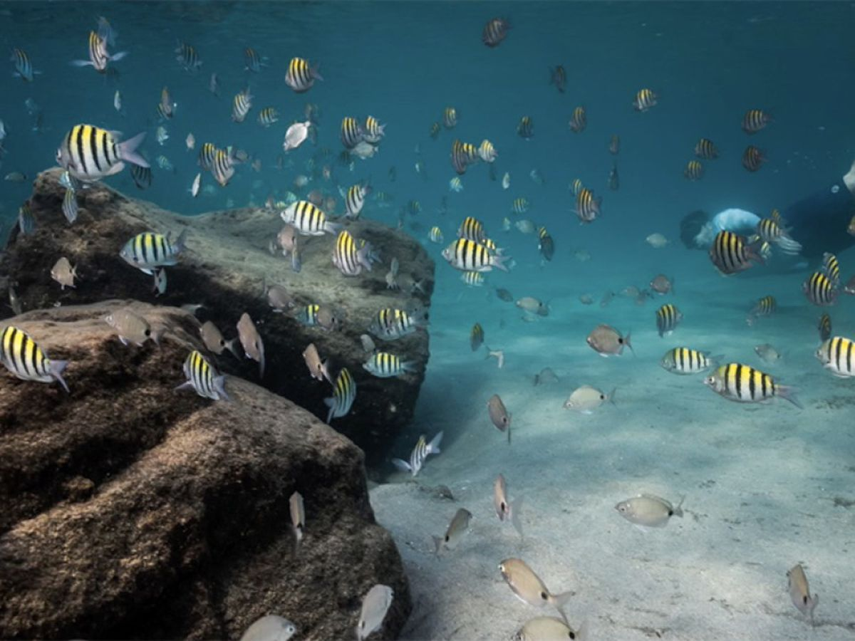 Artificial reefs help marine life thrive, improve struggling natural reef system