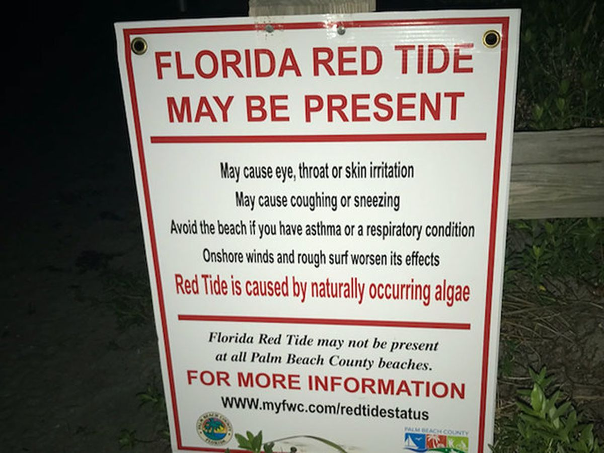 Beaches Open Today In Palm Beach County Following Week Of Red Tide