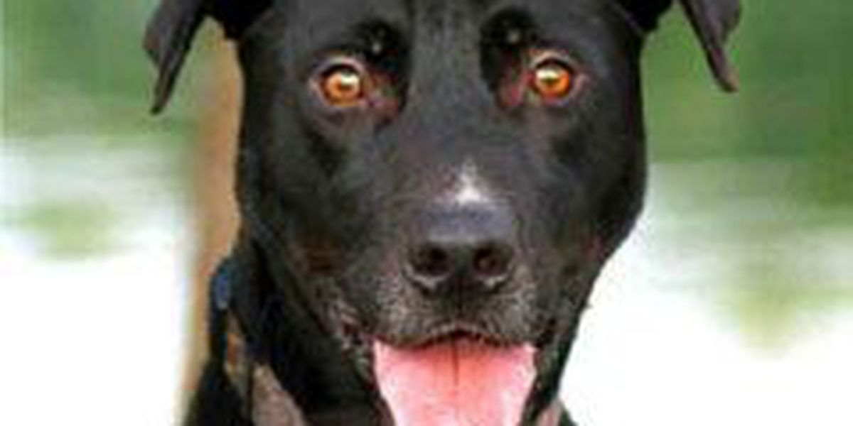 Adopted! Pet of the Week: Shadow