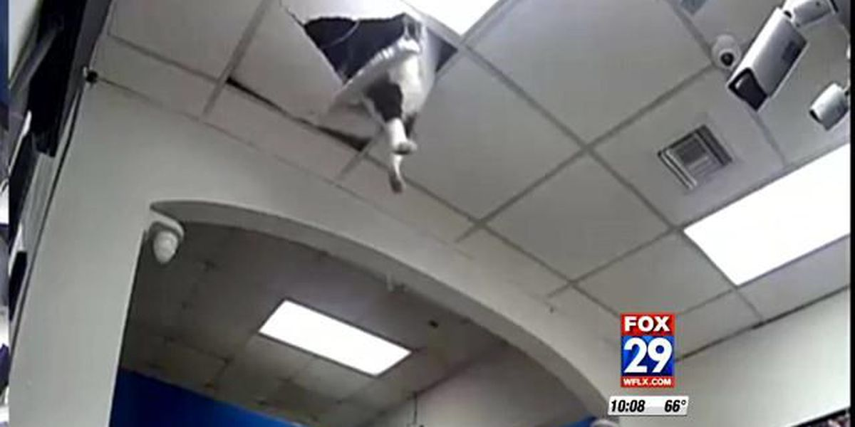 """Cat"" burglary caught on camera"