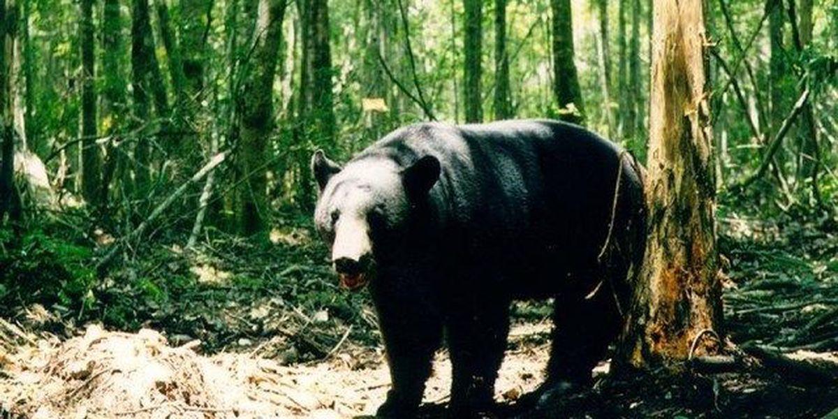 Ex-senator says bear hunt is 'unforgiveable'