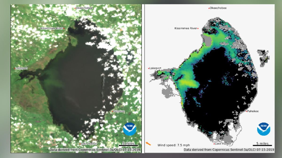 NOAA satellite shows algae along much of the west, northern sides of Lake Okeechobee