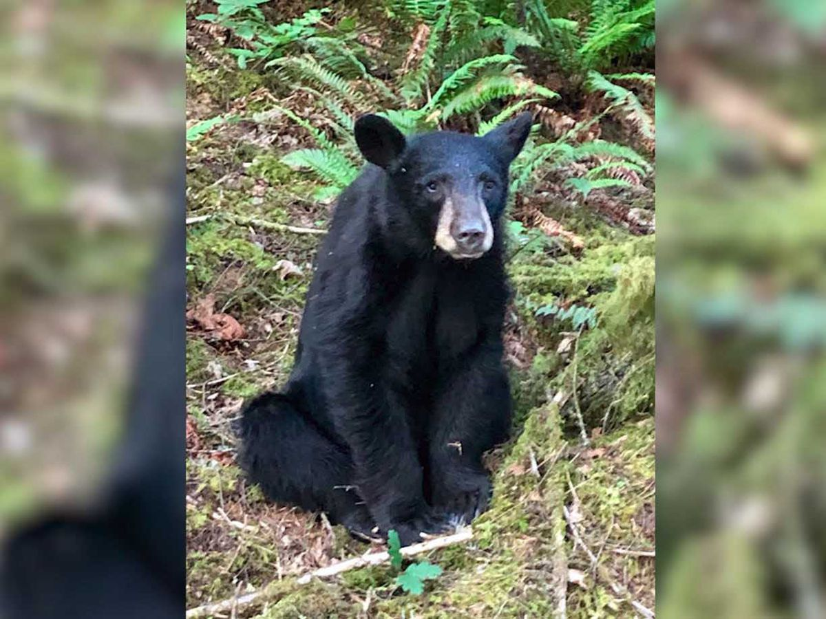 Young black bear fatally shot after it grew too familiar with people who regularly fed it