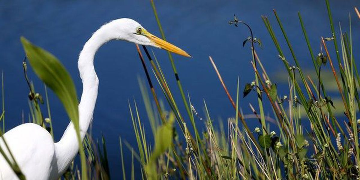 Major bill includes help for Everglades, beaches