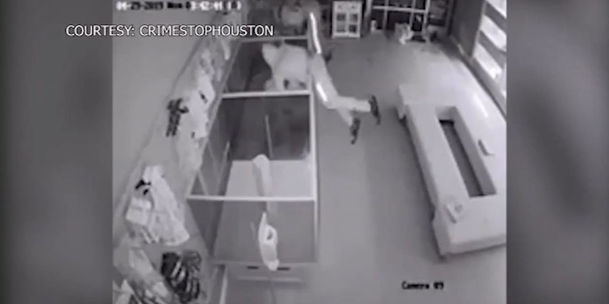 Thieves steal 5 puppies worth $44K in pet store heist caught on camera